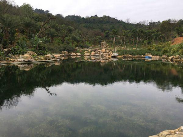 我公司承建的青秀山兰园景观湖水质改善与生态修复工程顺利通过竣工验收